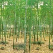 http://tranhdecor.com/wp-content/uploads/2013/06/Tranh-tuong-noi-ngoai-that-10.jpg