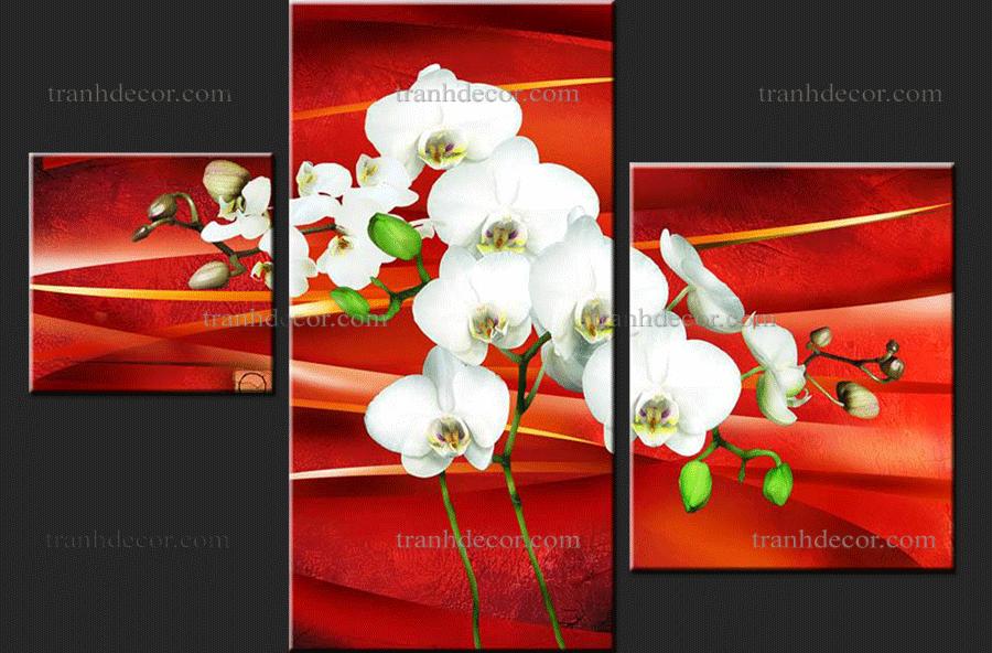 Bộ tranh hoa phong lan trắng số 2.012