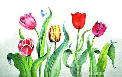 tranh-hoa-tulips (12)