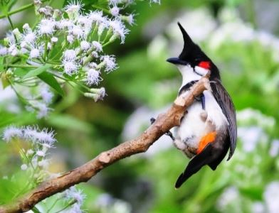 tranh phong thuy chim chao mao