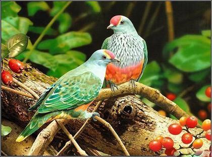 tranh phong thuy chim tuong tu