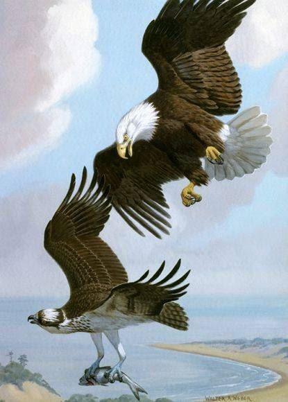 tranh phong thuy chim ung