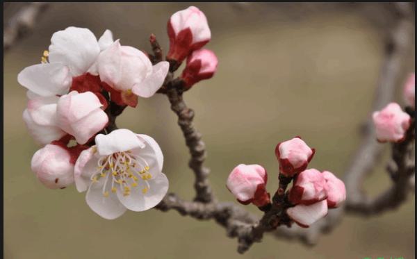 tranh phong thuy hoa hanh