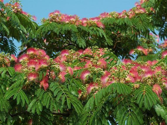 tranh phong thuy hoa hop hoan