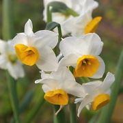 tranh phong thuy hoa thuy tien