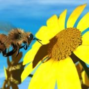 tranh phong thuy ong mat