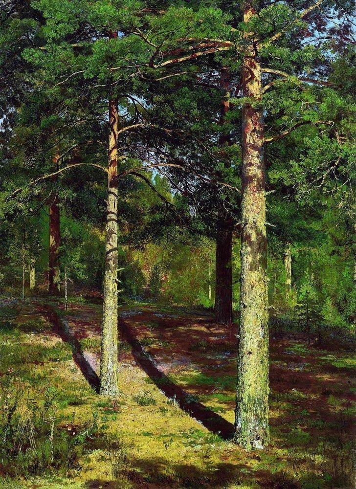 tranh phong cảnh đẹp Pines in sunlight